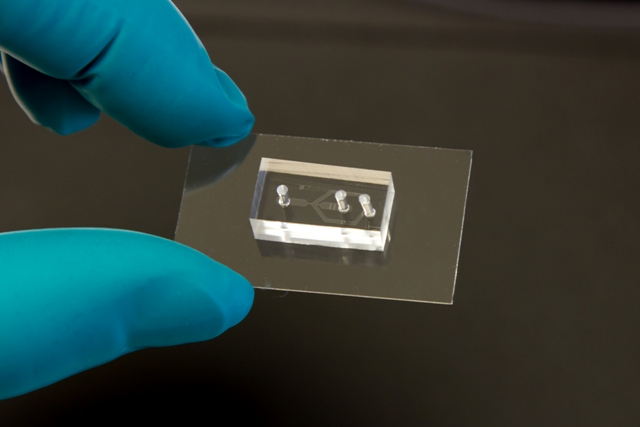 Mikrofluid. Chip Zellmechanik Dresden